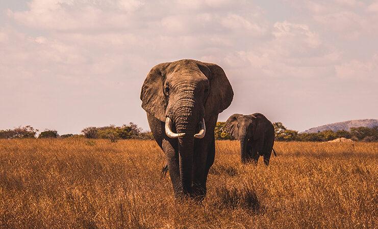 meilleure destination voyage 2019 botswana
