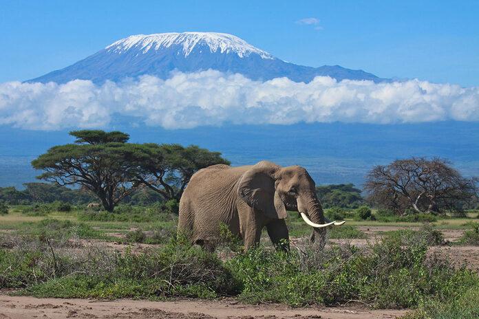 kilimanjaro tanzanie