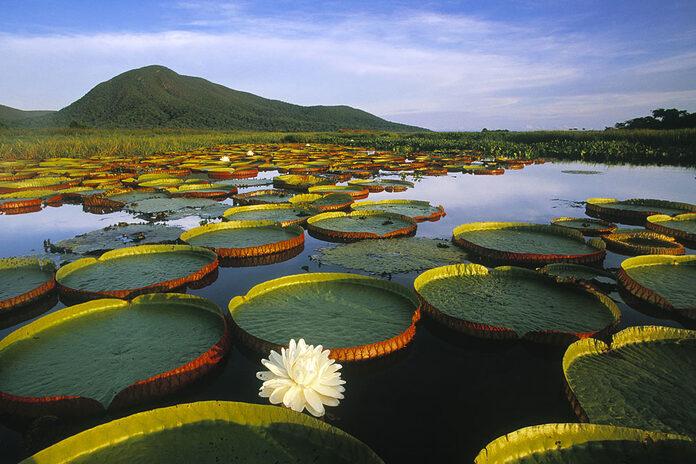 pantanal bresil