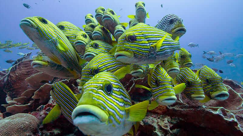 poisson tropical indonésie